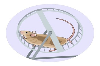 A mouse on a wheel